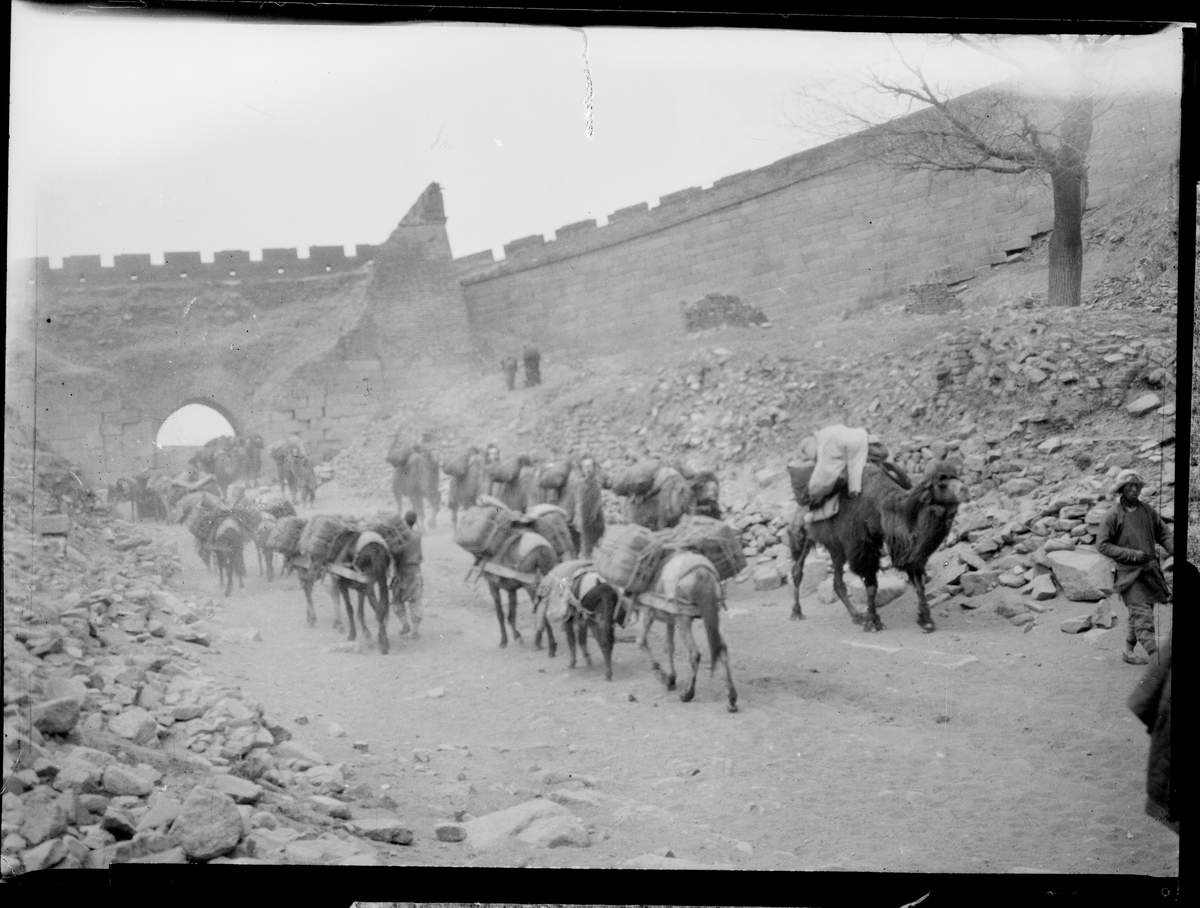 Esler og kameler vandrende i hver sin retning foran en mur.