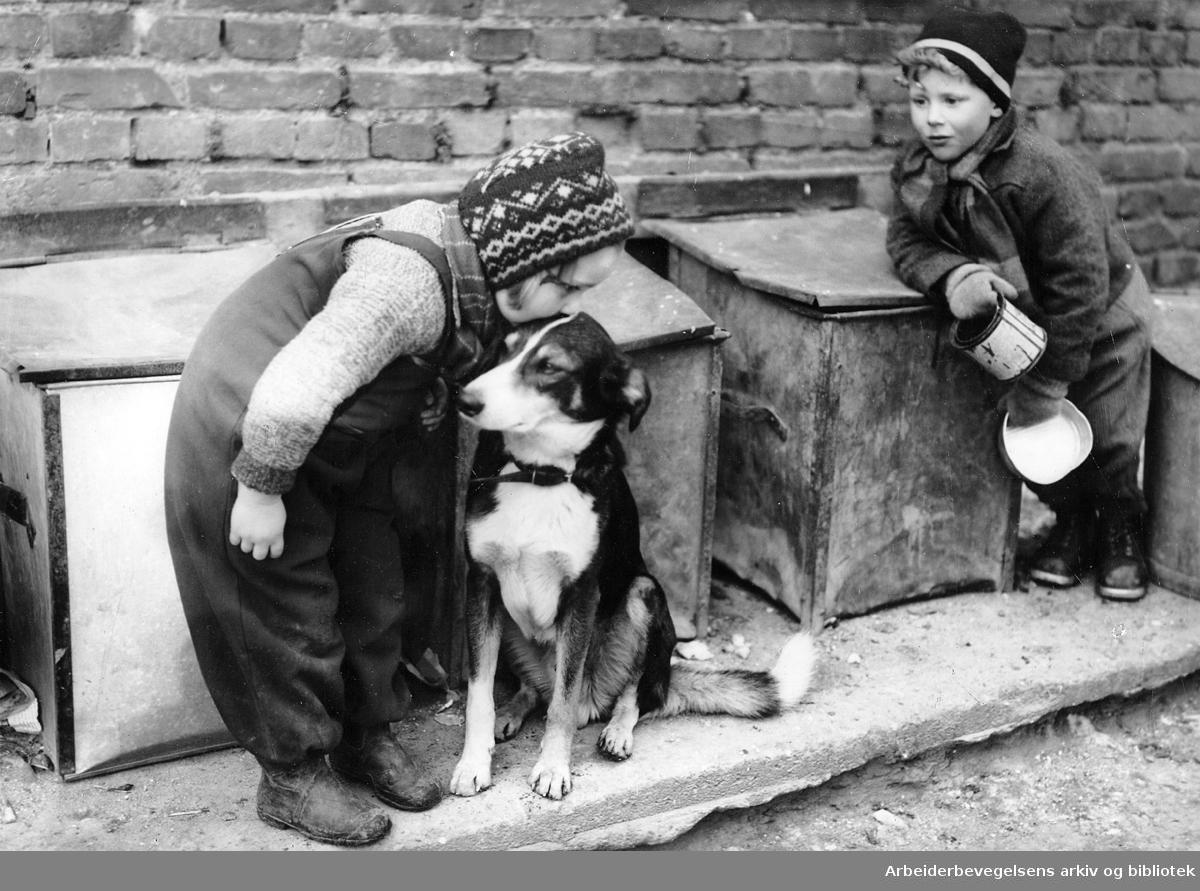 Barn med en hund i et gårdsrom i Jens Bjelkes gate,.mars 1949