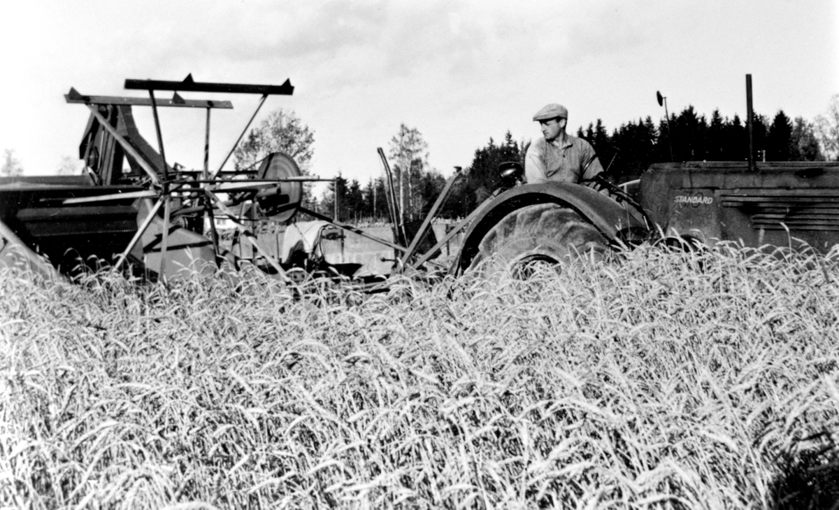 Skuronn på Tørud gård, Ringsaker. Gudbrand Tørud kjører Standard traktor med selvbinder.