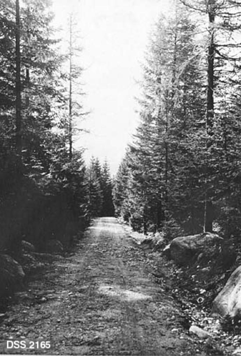 """Skogsbilvegen """"Via bella"""" ved Myklebust i Høylandkomplekset statsskog.  Vegen later til å være bygd av stedegen masse.  Den har grøfter på begge sider, og i ytterkanten av grøftene ligger det en del store steinblokker.  På begge sider av vegen vokser det granskog."""
