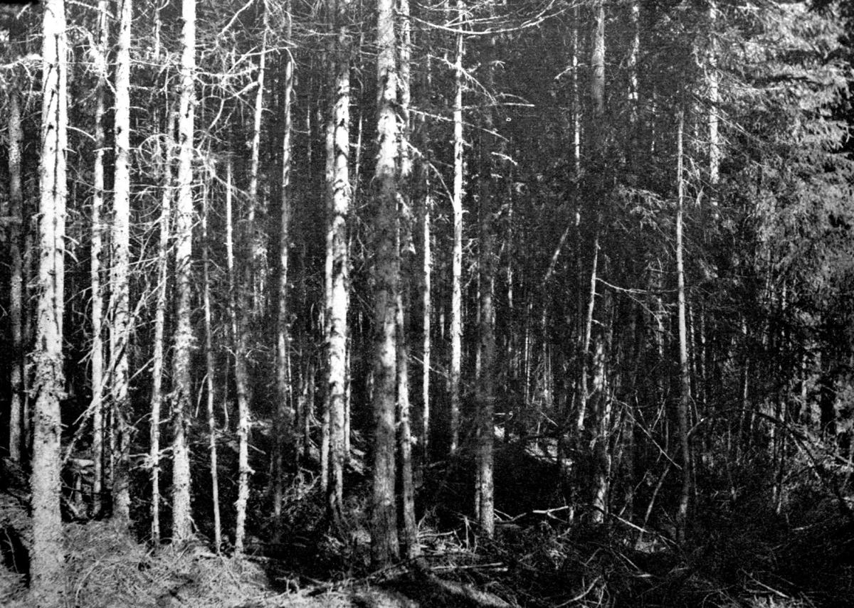 Skogsterreng
